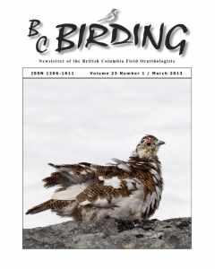 bcfo23-1 cover