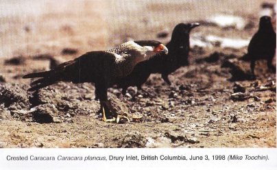 From: Birders Journal Vol 7 Number 4, Aug/Sept 1998