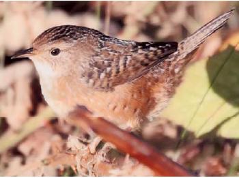 From British Columbia Birds Volume 14, 2006
