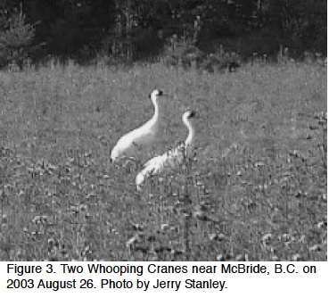 From British Columbia Birds, Vol 18, 2008