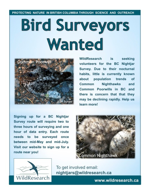 2014 Nightjar Survey poster
