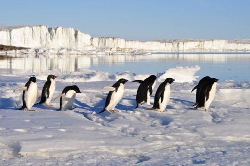 penguins_small