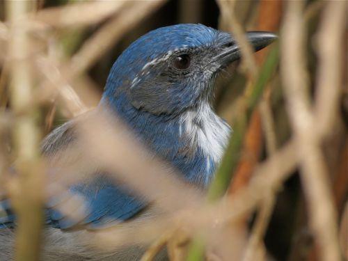 """A """"Good Bird"""" on any BC Christmas Bird Count!"""